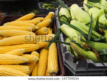 Sweetcorn - stock photo