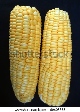 sweetcorn on the black background