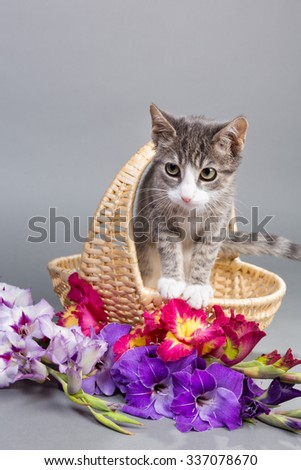 sweetes kittens - in the flower basket
