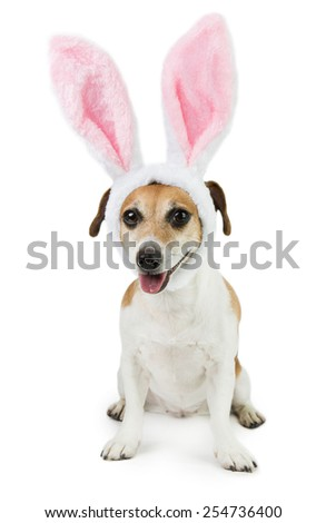 Sweetest dog with ears Easter Bunny - stock photo