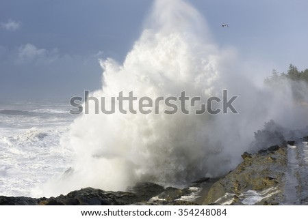 Swells of a Decade Crashing Against the Cliffs of Shore Acres State Park, Coos Bay Oregon