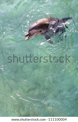 Swimming dolphins - stock photo