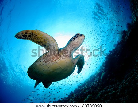 Turtle Stock Photos, Illustrations, and Vector Art