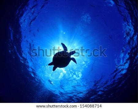 swimming turtle and sunshine - stock photo