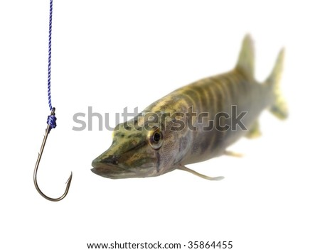 swimming up to empty metal hook pike - stock photo