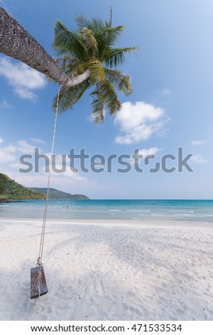 swings hang on the coconut trees