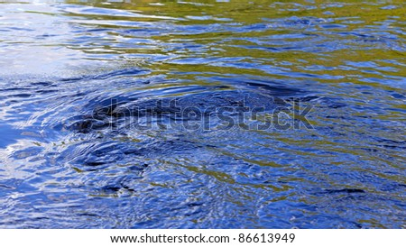 Swirling blue water around large rock in river.