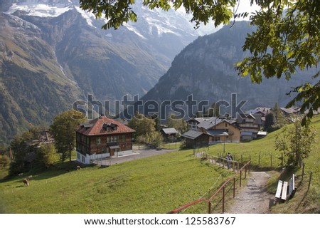 Swiss town of Gimmelwald in the alps with hiking path and tree canopy