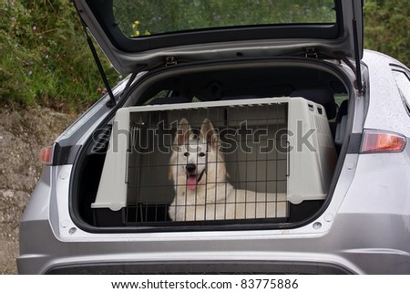 swiss white shepherd dog in the kennel of a car - stock photo