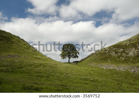 Sycamore Gap, Hadrians Wall scene from the movie Robin Hood Prince of Thieves