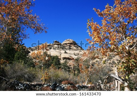 Sycamores showing autumn colors in a canyon with geological formations in the background, high desert, California - stock photo