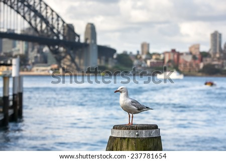Sydney Harbour Bridge with seagull - stock photo