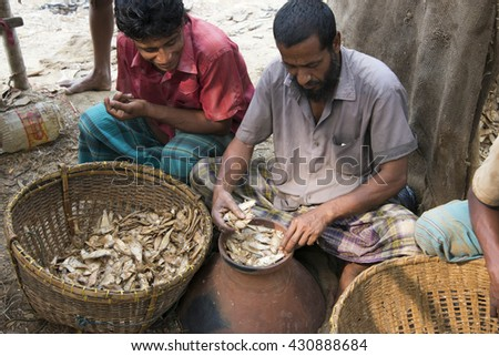 Sylhet, India - March 29, 2016: Production of fermented fish (marine) mainly bashparta at the bank of Surma river - stock photo