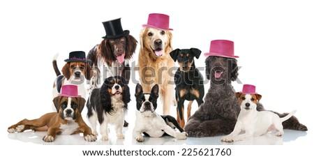 Sylvester dogs - stock photo