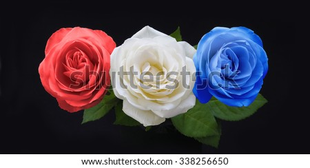 Symbolic Red White and Blue Roses - three rose heads in red white and blue on a black background significant to many countries national colors - stock photo
