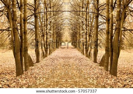 Symmetric maple alley - stock photo