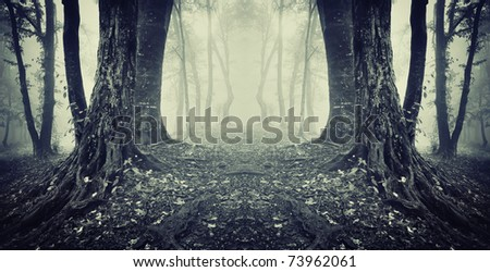 symmetrical photo of a secret passage in a dark mysterious forest with fog - stock photo