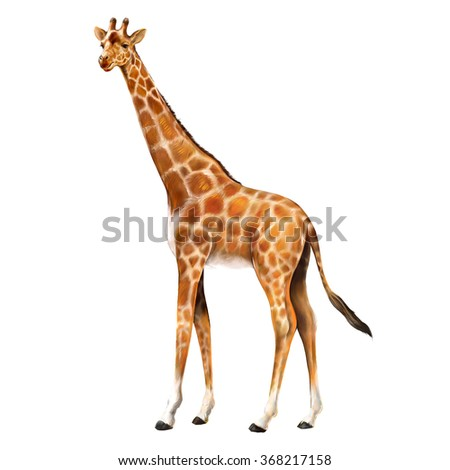 Sympathetic  realistic giraffe. Illustration of little funny giraffe