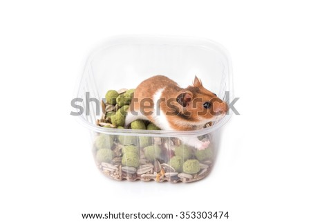Syrian hamster eating some food from a bowl