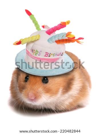 syrian hamster happy birthday - stock photo
