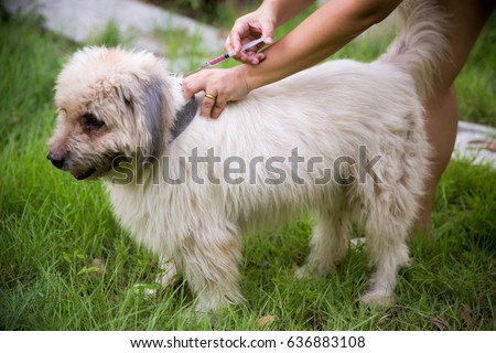 Rabies vaccine for child