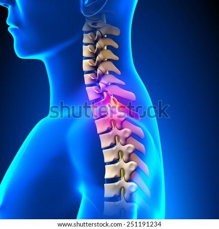 T1 Disc - Thoracic Spine Anatomy - stock photo
