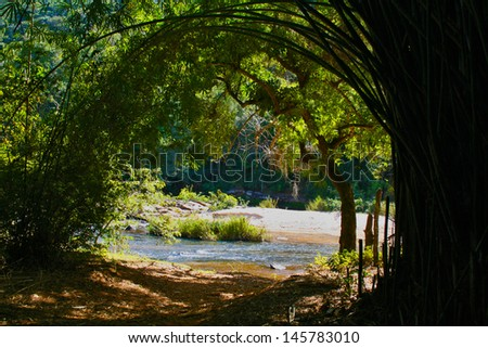 Natural De Bambus Ao Fundo Tunel Stock Photo Royalty Free