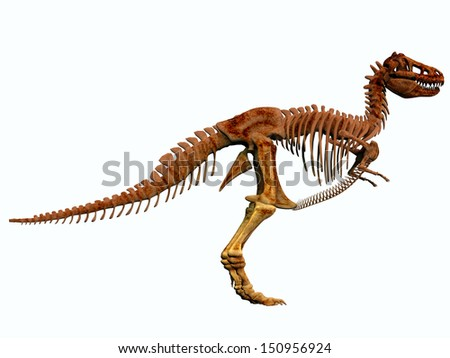 T-Rex Skeleton - Tyrannosaurus Rex lived in North America in the Cretaceous Period and was an intimidating predator.
