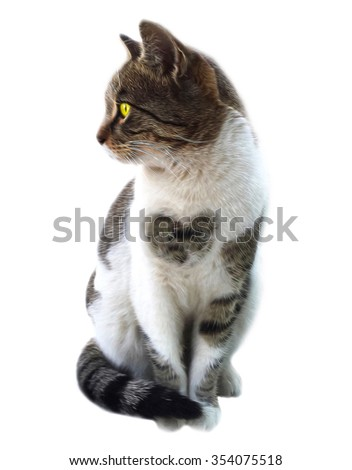 T-shirt Graphic,Cat print,cat graphic,cat illustration,cat canvas print,cat pattern design,cat face drawing,cat wallpaper,adorable cat,Funny cat,watercolor animal print,scottish cat - stock photo