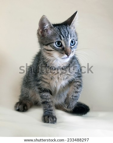 Tabby and white kitten lying on yellow background