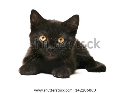 Tabby Black British Shorthair Kitten on white background Cute british shorthair kitten laying on white background - stock photo