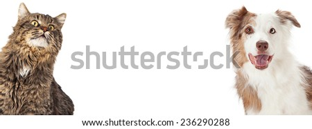Tabby cat and Border Collie dog coming out of the side corners of a photo sized to fit a social media timeline cover placeholder. - stock photo