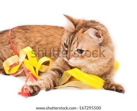 Tabby Cat and Holidays decoration on a white background - stock photo