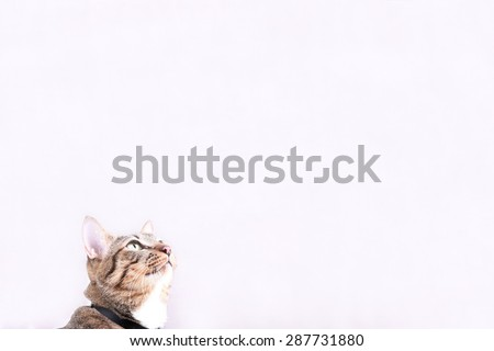 tabby cat blurry with gray background. Place for text - stock photo