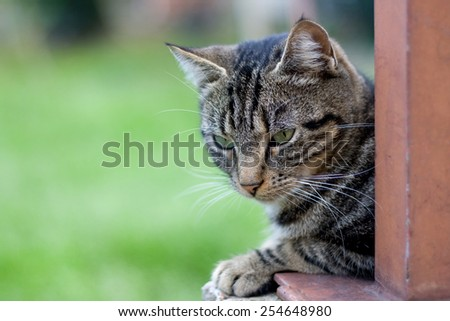 Tabby cat close up, selective focus. Green background and copy space.  - stock photo
