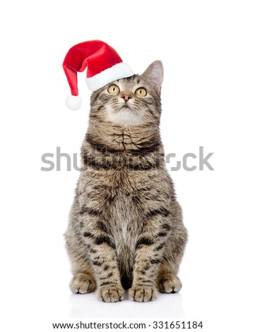 Tabby cat in red christmas hat looking up.  isolated on white background - stock photo