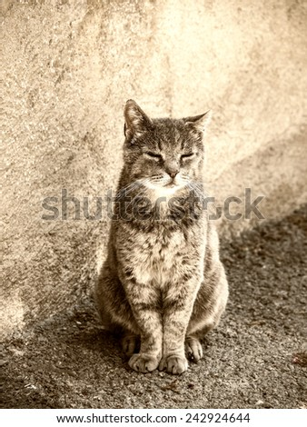 tabby cat in wonderful light mood - stock photo