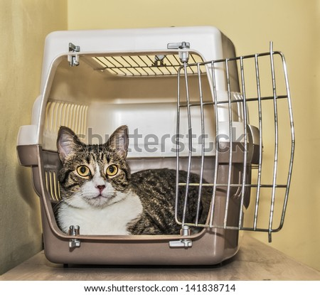 Tabby cat inside a cat carrier box - stock photo