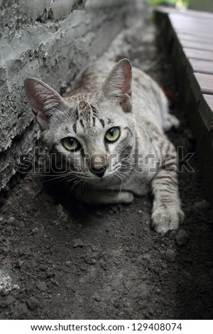 Tabby cat laying down - stock photo