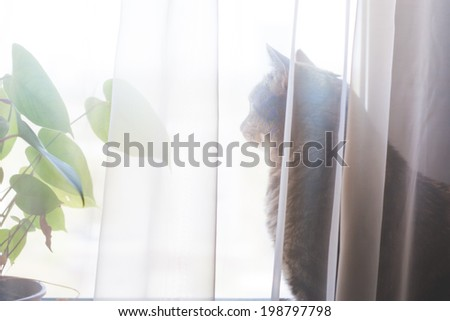 Tabby cat looking at the window - stock photo