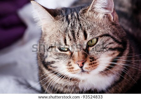 Tabby Cat looking into side