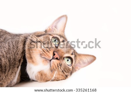 Tabby cat looking something - stock photo