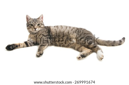Tabby cat lying and looking in camera, isolated on white background - stock photo