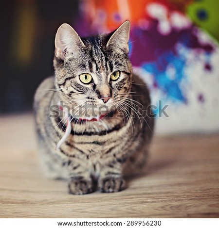 Tabby cat lying down on a carpet with bright colours/colors in background. Eyes in focus, shallow depth of field. Color/colour effect added. - stock photo