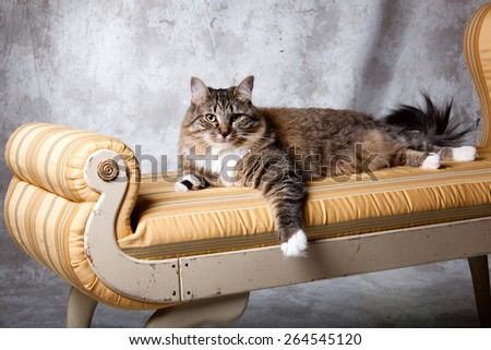 Anita scharf 39 s portfolio on shutterstock for Cat chaise lounge
