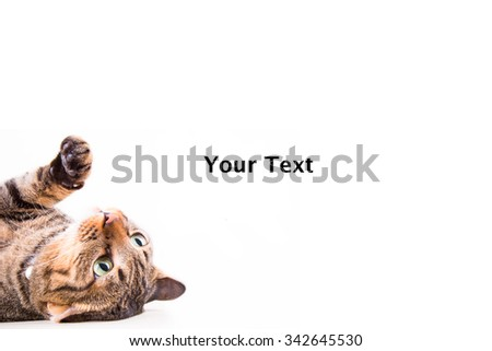 tabby cat on blank banner. Place for text - stock photo