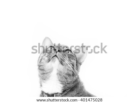 tabby cat on blank banner. Place for text,Tabby cat looking something in black and white  - stock photo