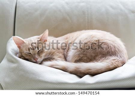 tabby cat on sofa - stock photo