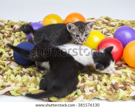 Tabby cat playing with food ball