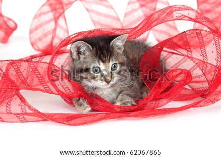 Tabby cat playing with red ribbon on white background